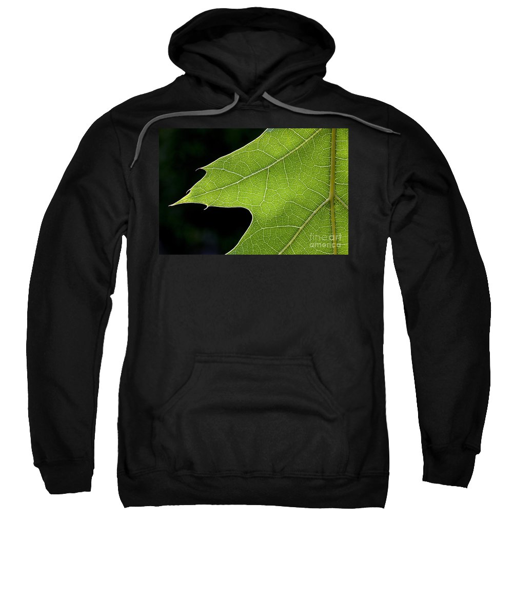 Northern Red Oak Sweatshirt featuring the photograph 131114p195 by Arterra Picture Library