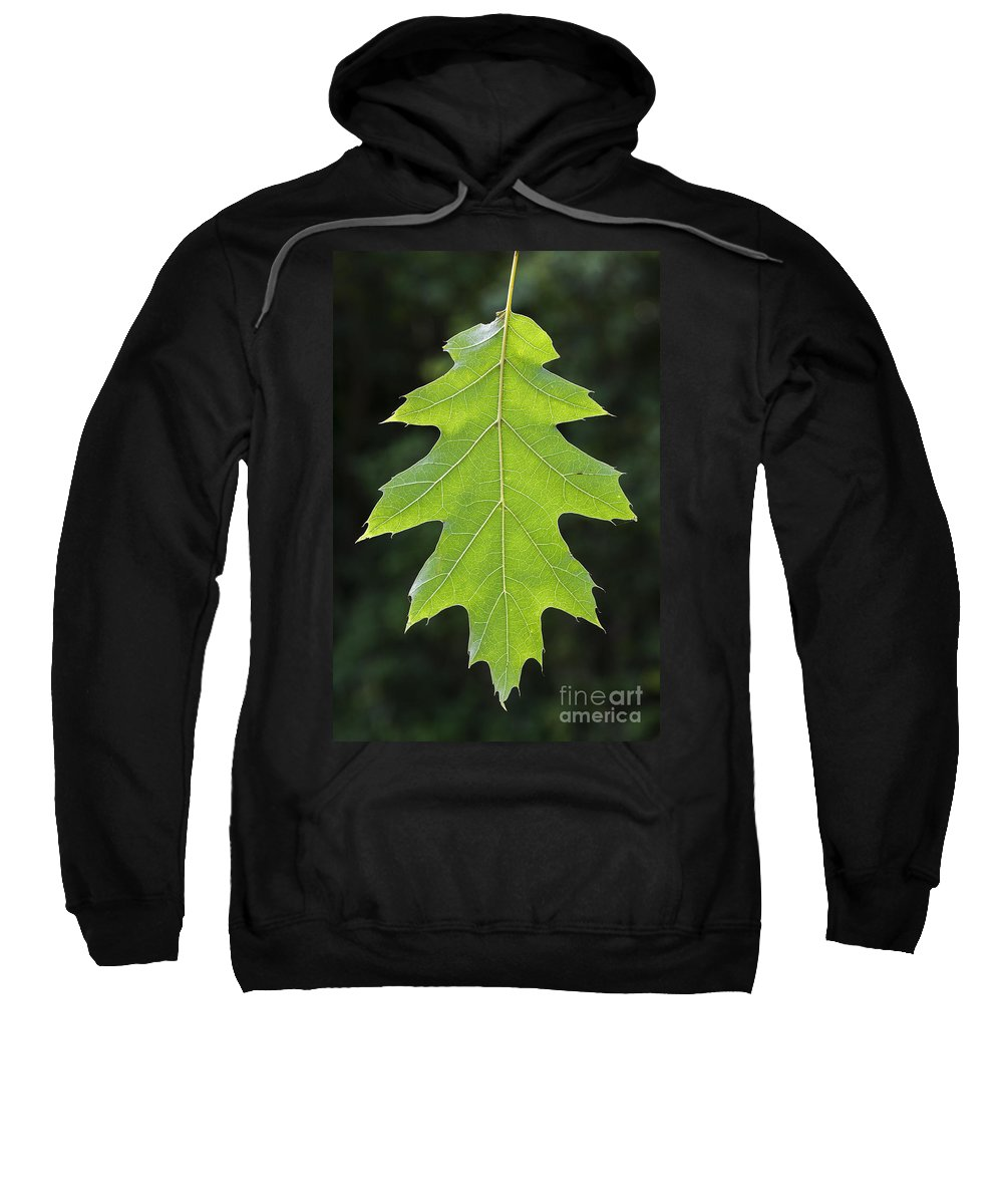 Northern Red Oak Sweatshirt featuring the photograph 131114p196 by Arterra Picture Library