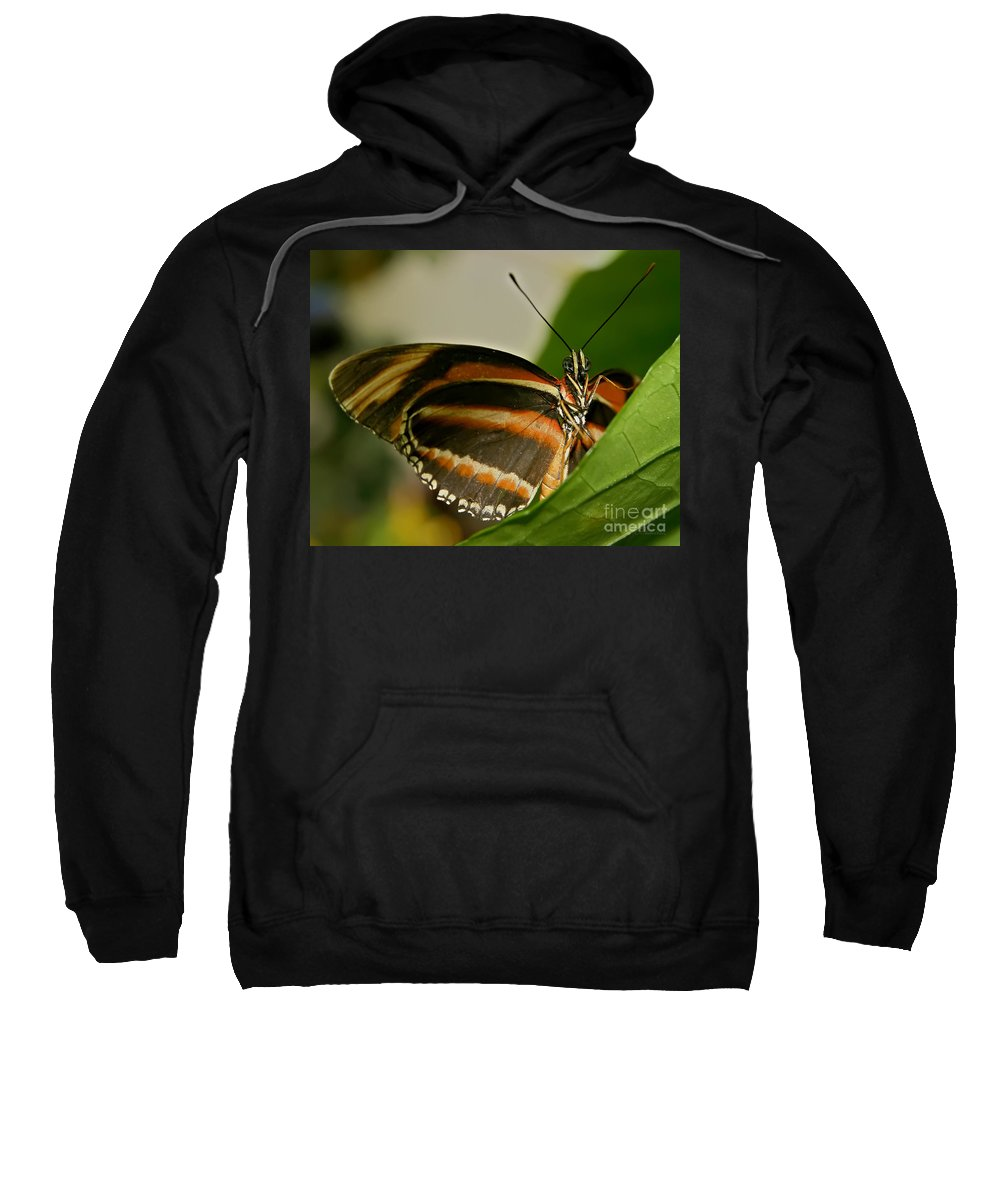 Butterfly Sweatshirt featuring the photograph Butterfly by Olga Hamilton