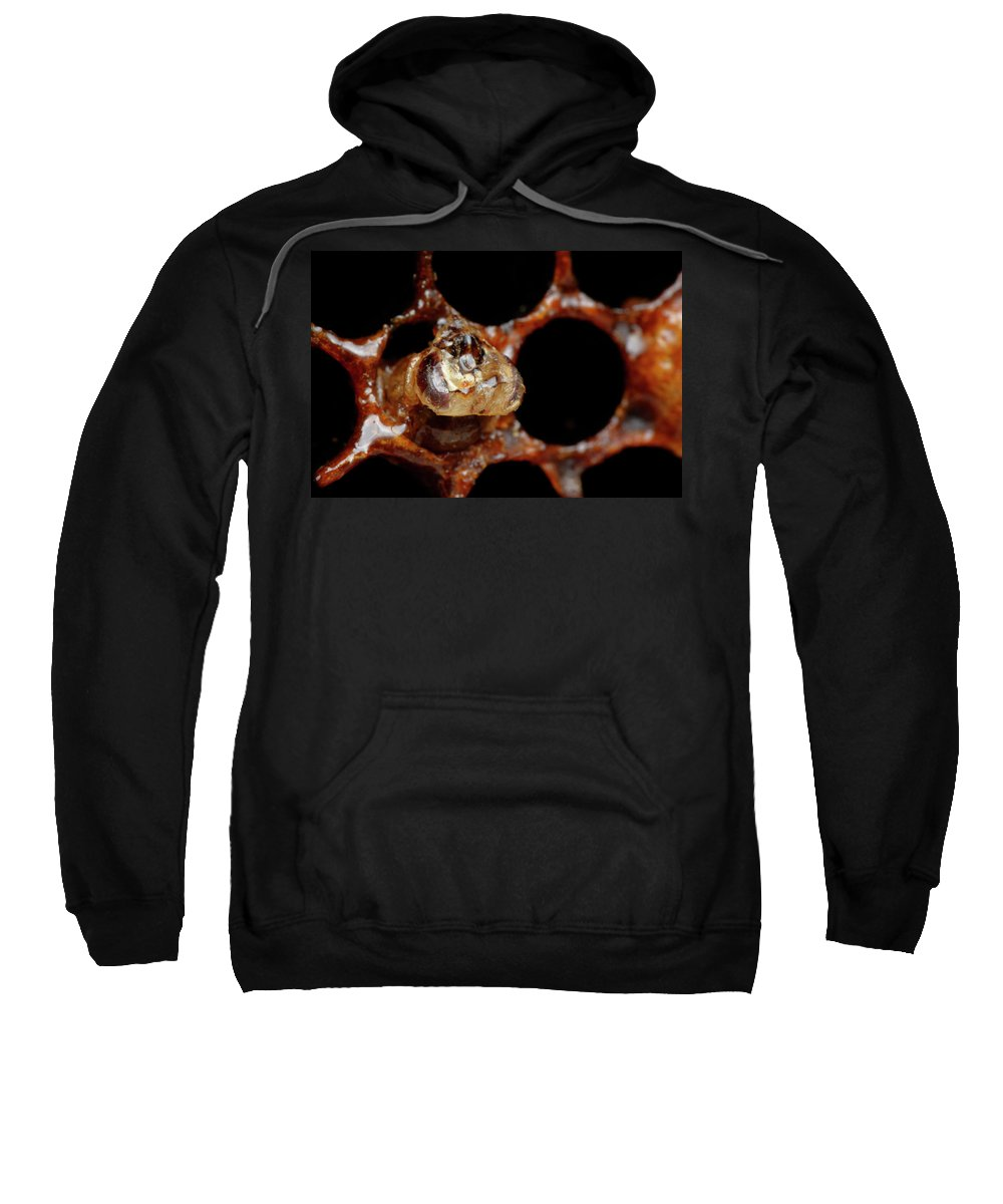 Selective Focus Sweatshirt featuring the photograph A Honeybee Hive After Colony Collapse by Paul E Tessier