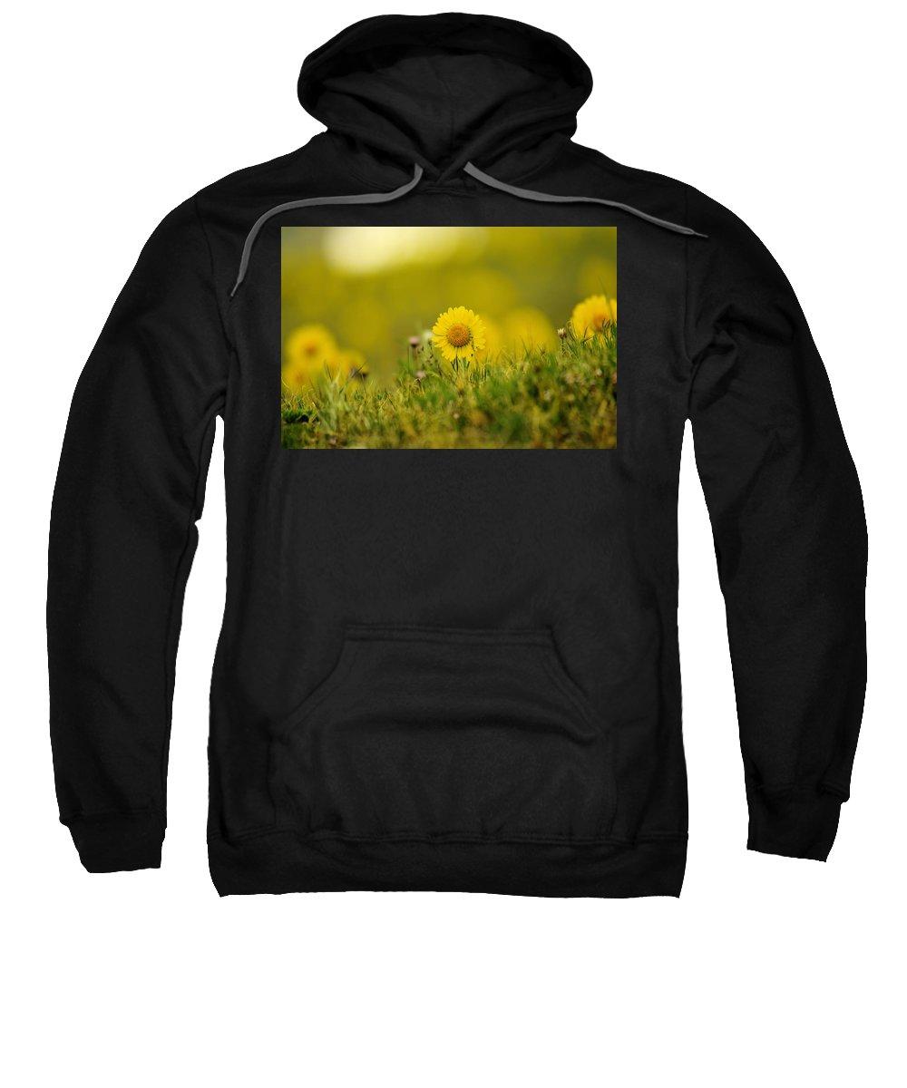 Flowers Sweatshirt featuring the photograph Alpine Flowers by Jeff Swan