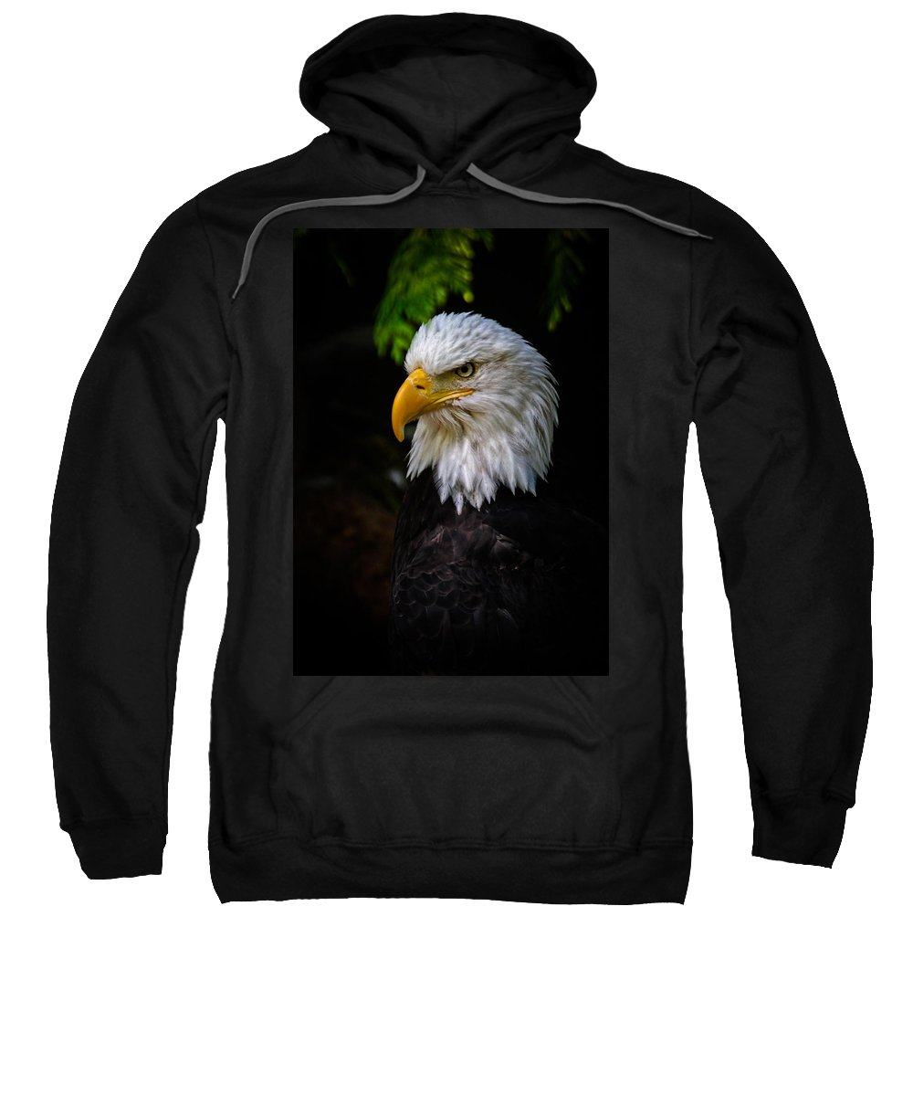 Eagle Sweatshirt featuring the photograph American Bald Eagle by Athena Mckinzie