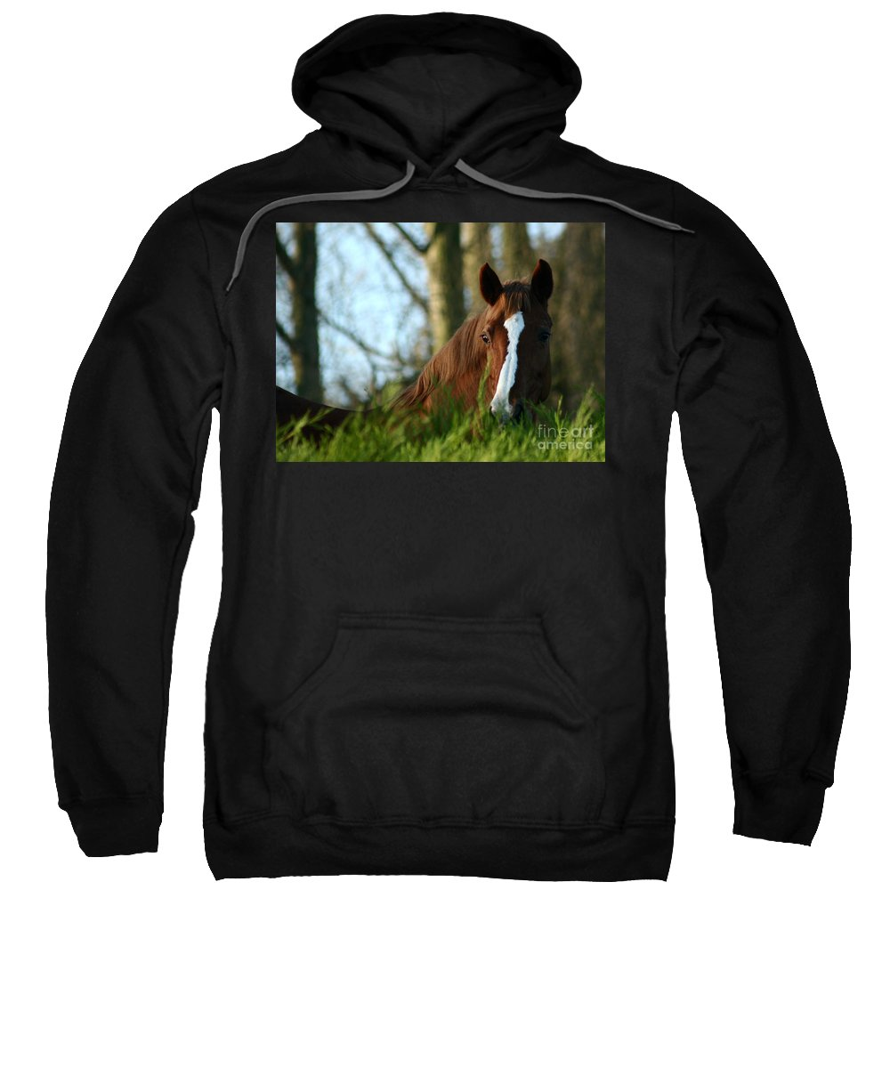 Chestnut Horse Sweatshirt featuring the photograph Behind The Fence by Angel Tarantella
