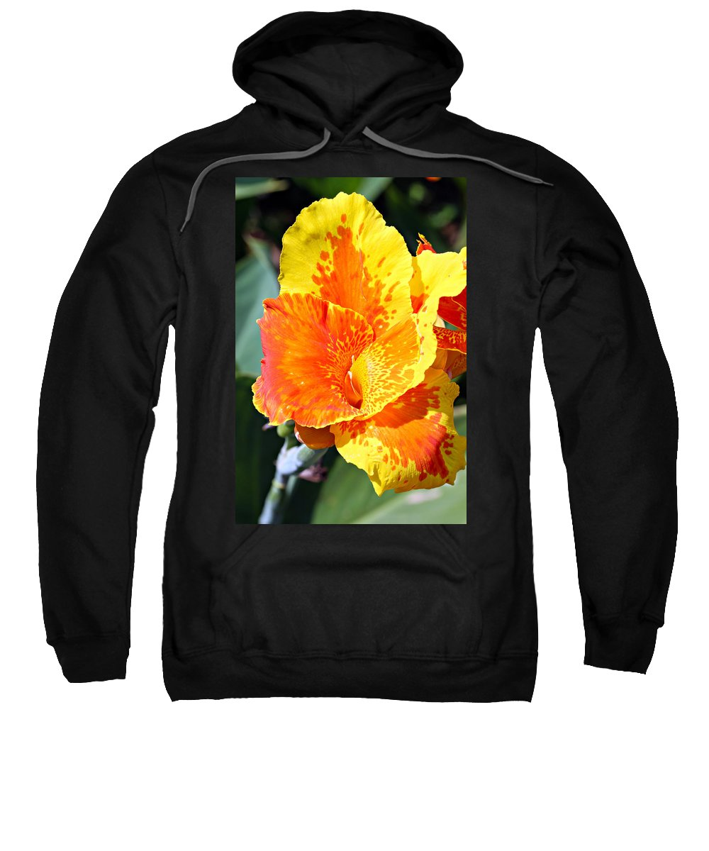 Canna Sweatshirt featuring the photograph Cannas by Paul Fell
