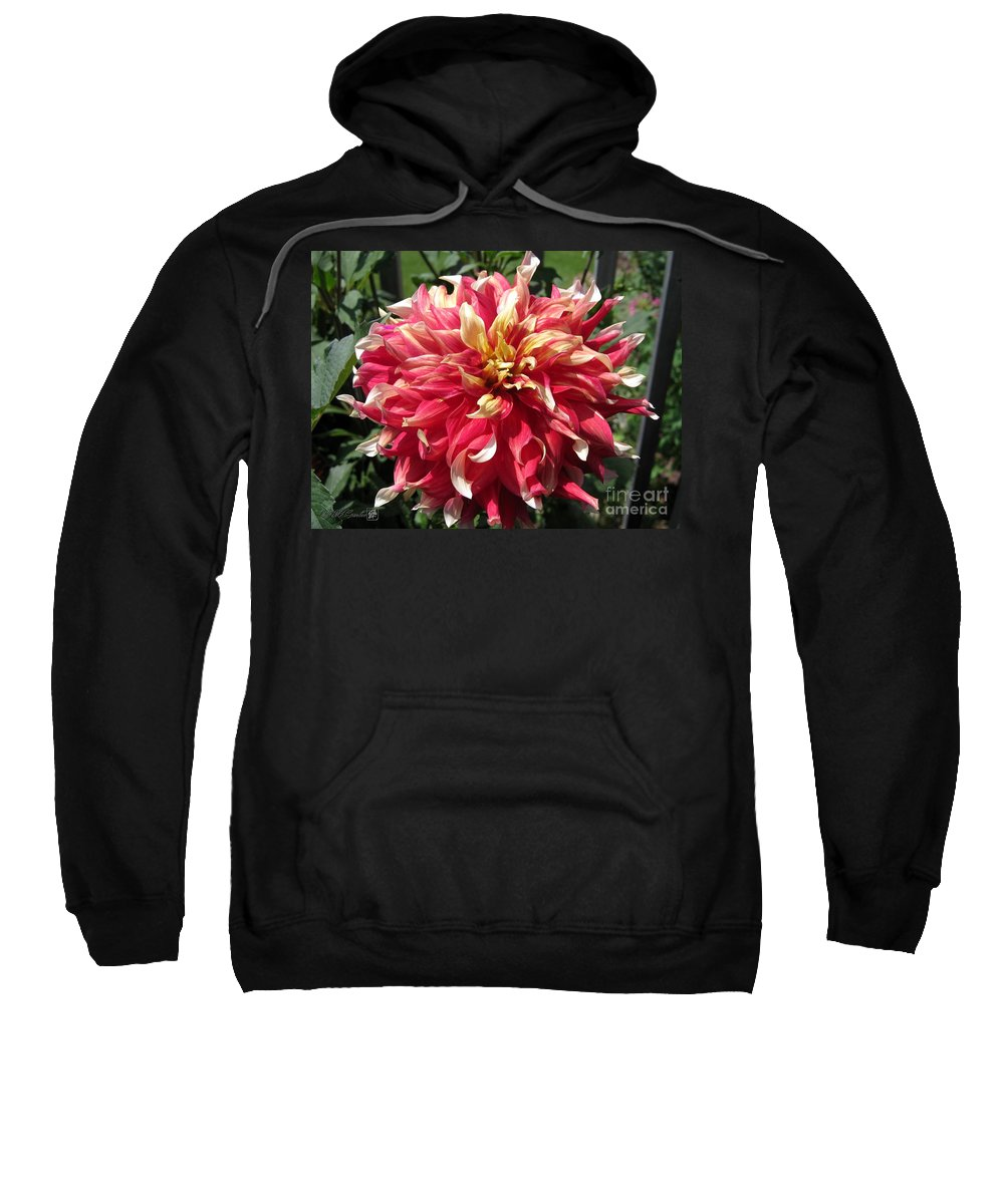 Mccombie Sweatshirt featuring the photograph Dahlia Named Bodacious by J McCombie