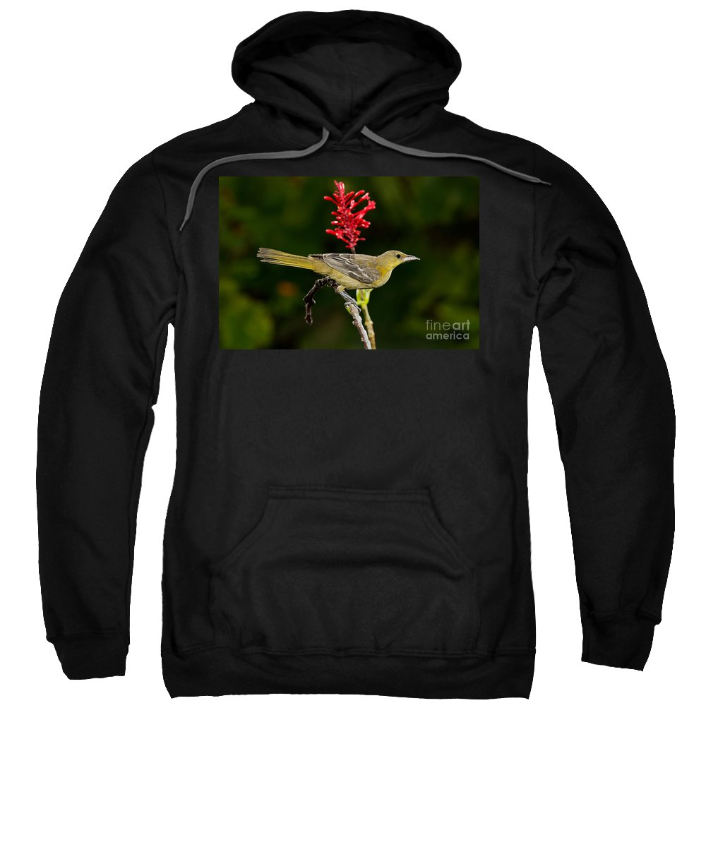 Hooded Oriole Sweatshirt featuring the photograph Hooded Oriole Juvenile by Anthony Mercieca