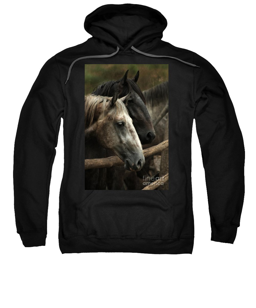 Horse Sweatshirt featuring the photograph Over The Fence by Angel Ciesniarska