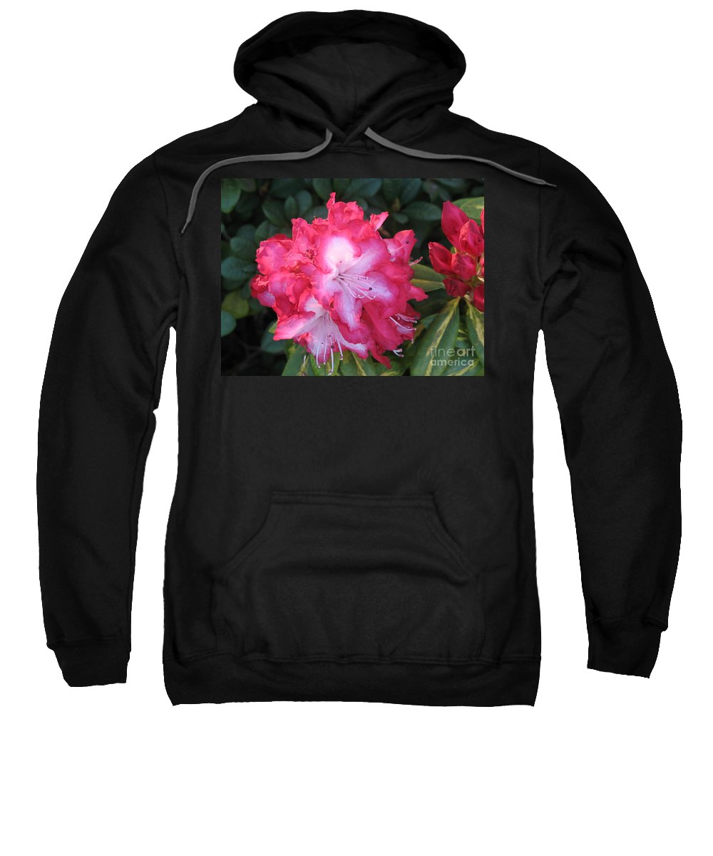 Rhododendron Sweatshirt featuring the photograph Pink Rhododendron by Christiane Schulze Art And Photography