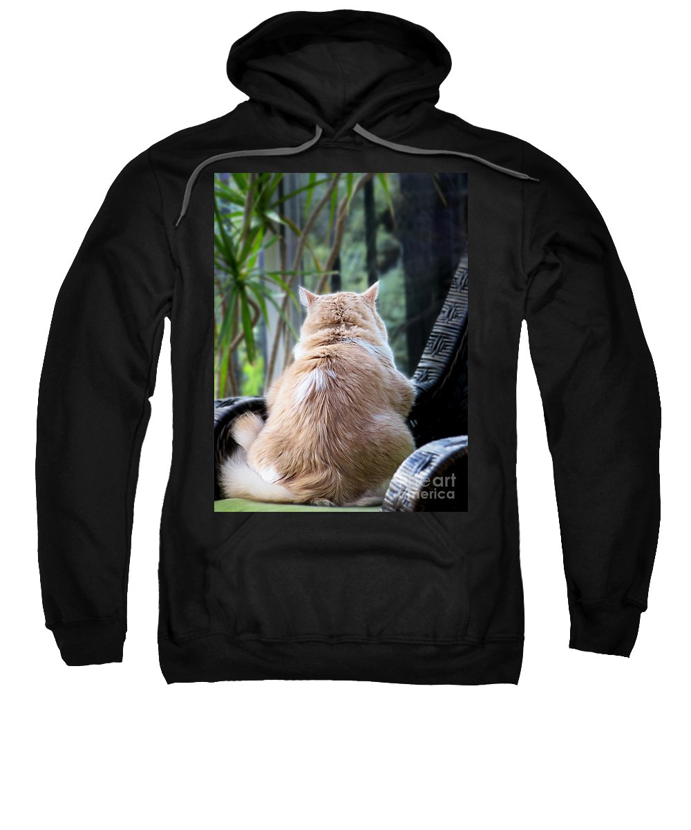 Cats Sweatshirt featuring the photograph Rainy Day Blues by Ellen Cotton