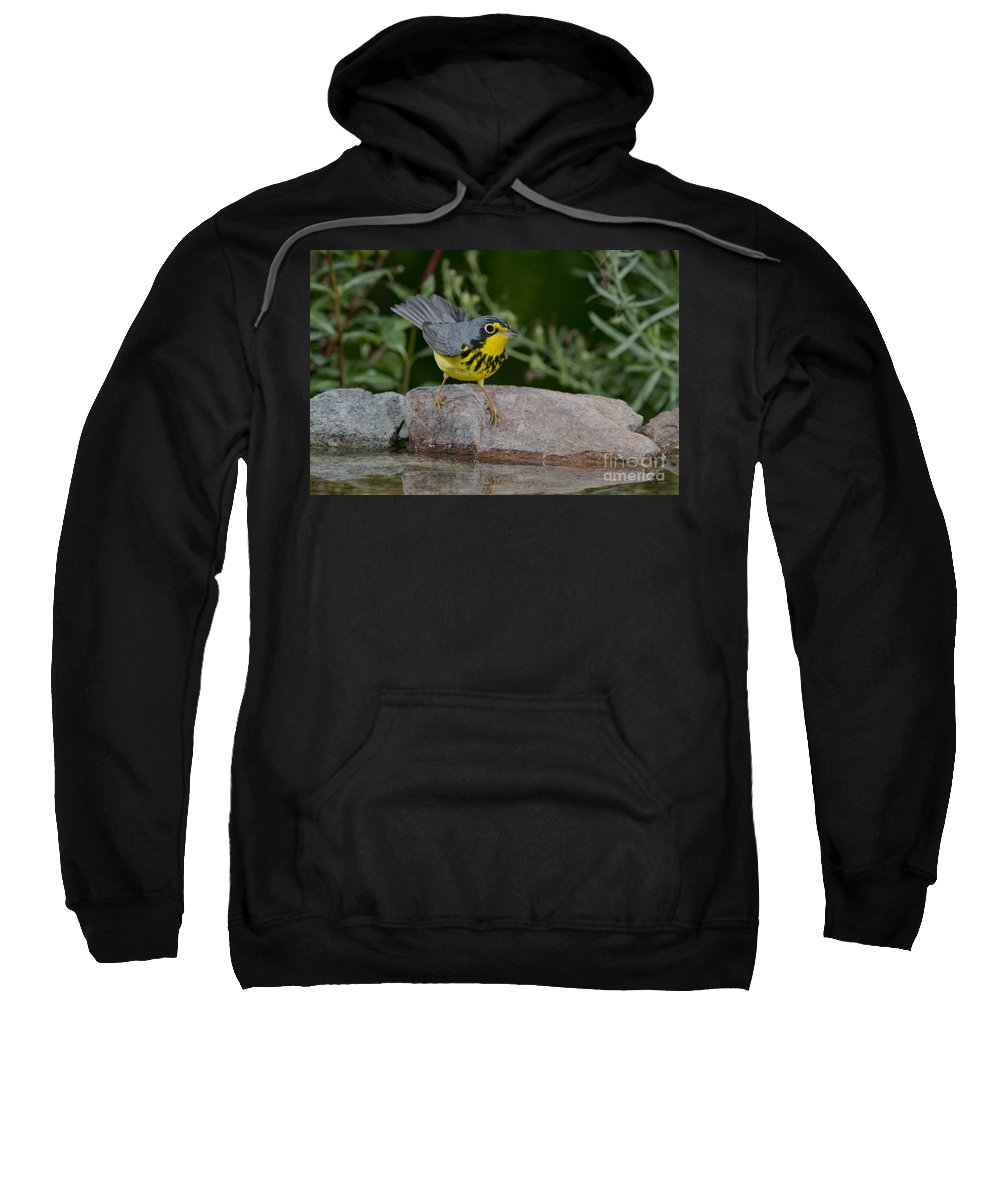 Canada Warbler Sweatshirt featuring the photograph Canada Warbler by Anthony Mercieca