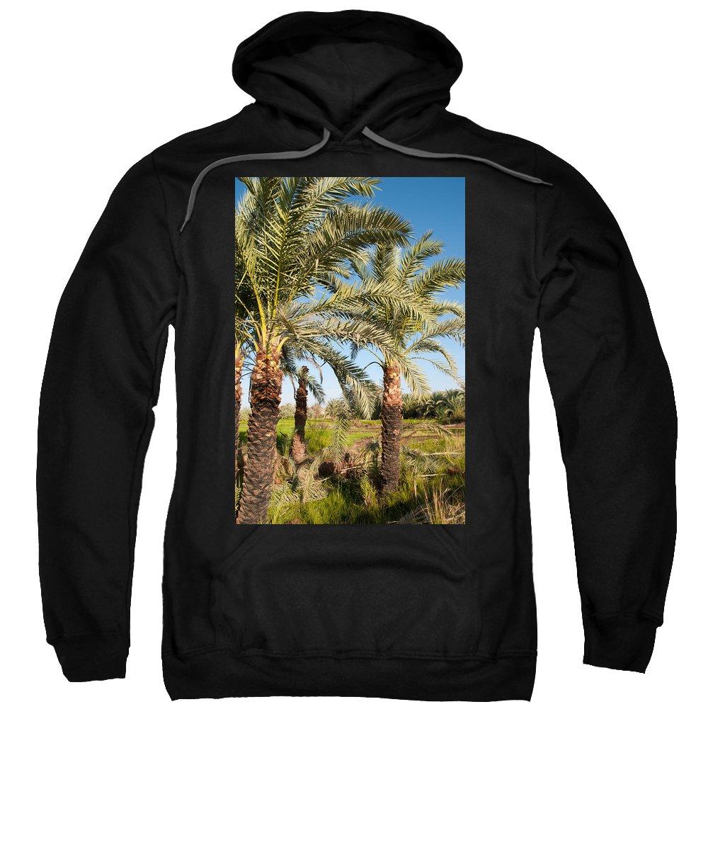 Oasis Palm Trees Sweatshirt featuring the digital art Dakhla by Carol Ailles