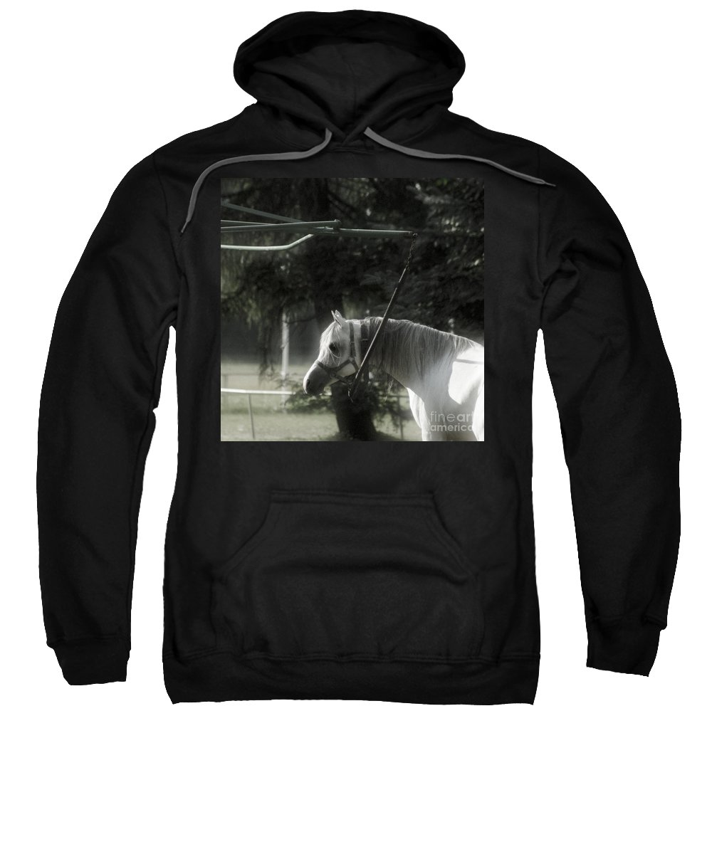 Horse Sweatshirt featuring the photograph In The Captivity by Angel Tarantella