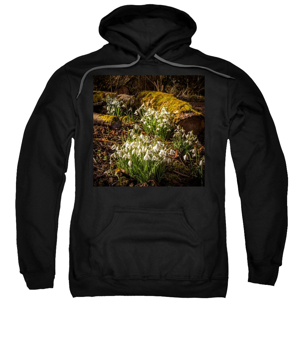 Berkshire Sweatshirt featuring the photograph Snowdrop Woods by Mark Llewellyn