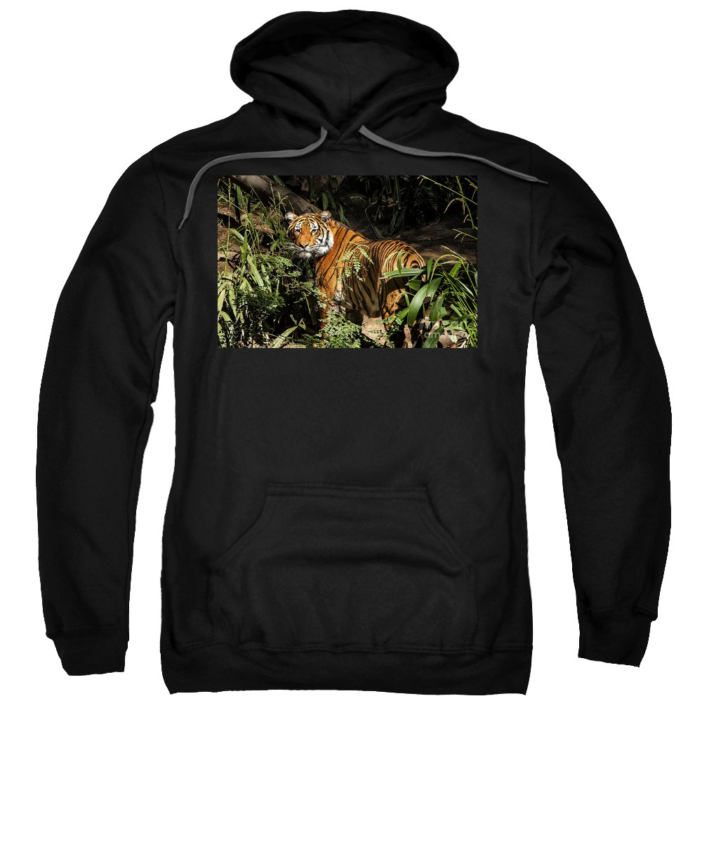 Tiger Sweatshirt featuring the photograph Tiger by Jon Berghoff