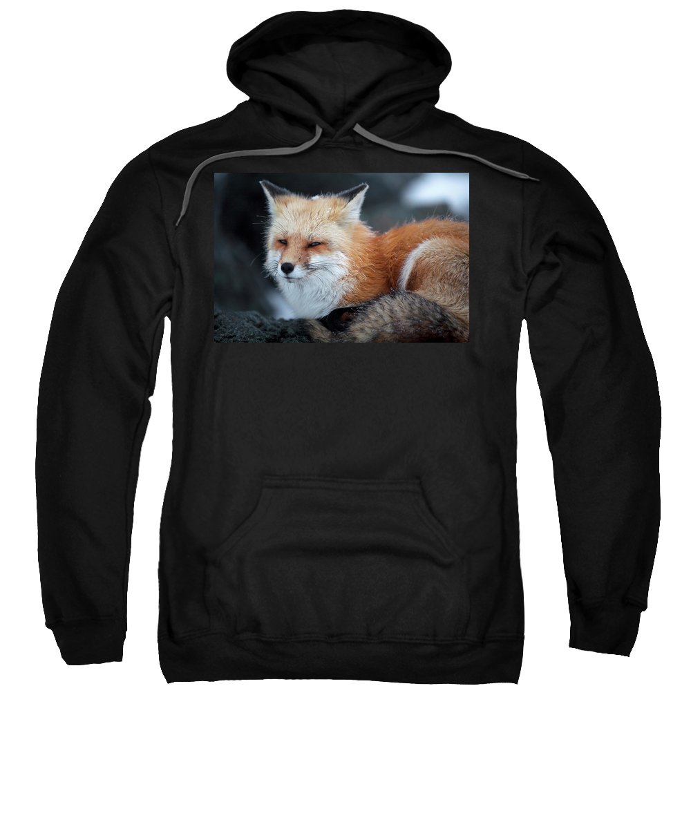Adapted Sweatshirt featuring the photograph A Red Fox On The Summit Of Mt by Jose Azel