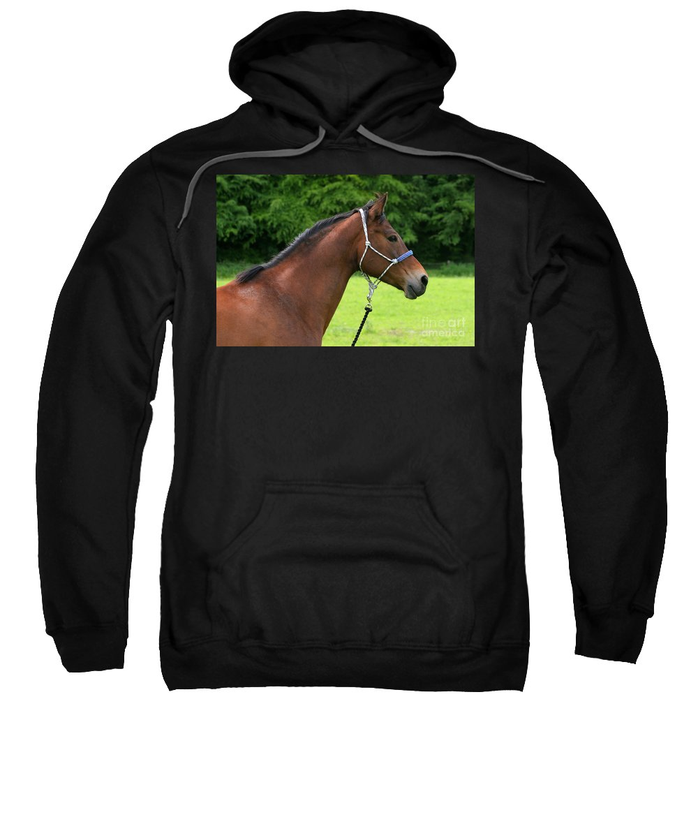 Bay Horse Sweatshirt featuring the photograph Horse Portrait by Angel Ciesniarska