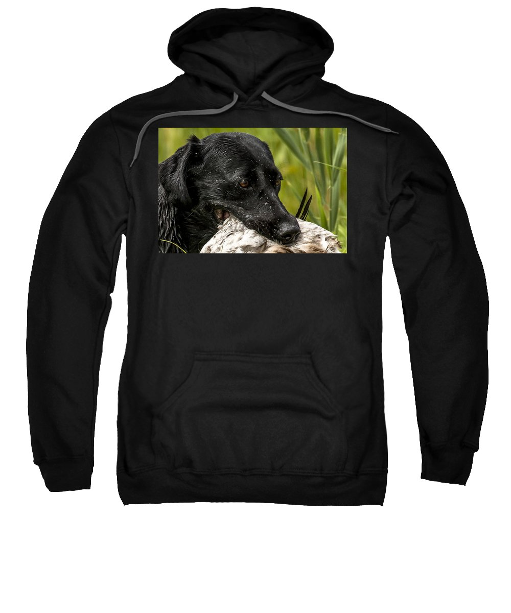 Ukc Hunt Test Sweatshirt featuring the photograph Labrador Retriever by Steven Clair