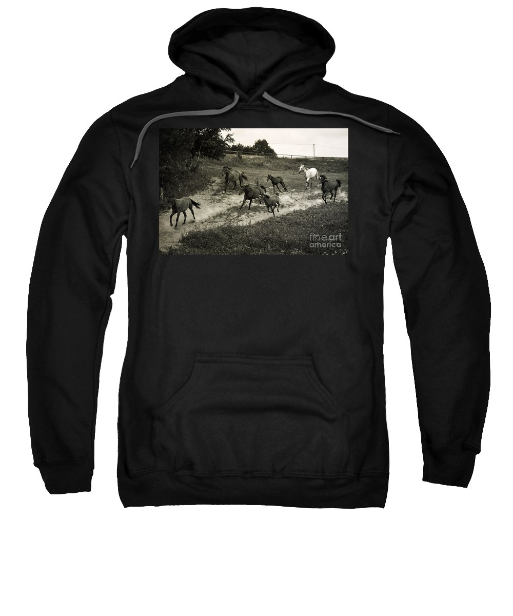 Horses Sweatshirt featuring the photograph Running Free by Angel Tarantella