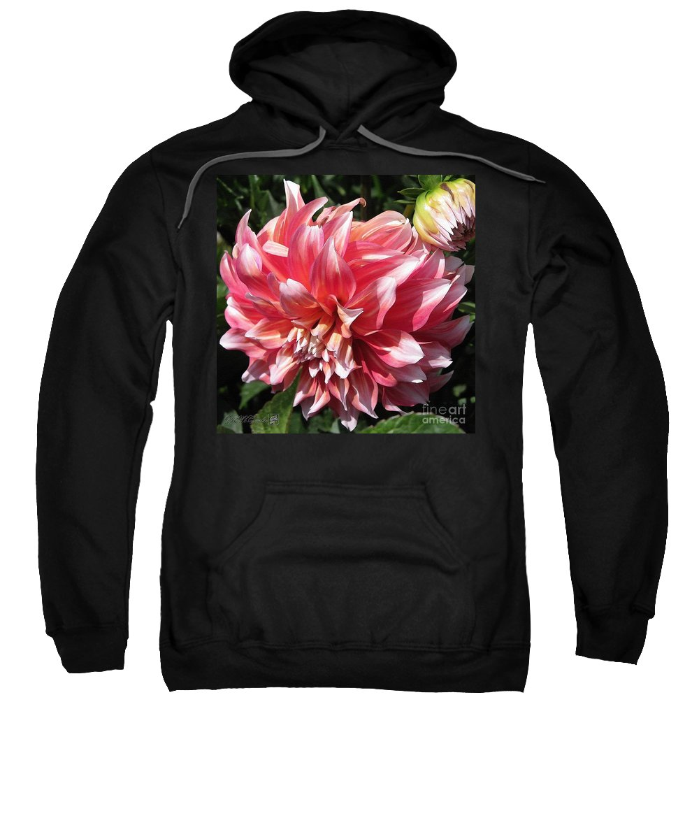 Mccombie Sweatshirt featuring the painting Dahlia Named Myrtle's Brandy by J McCombie