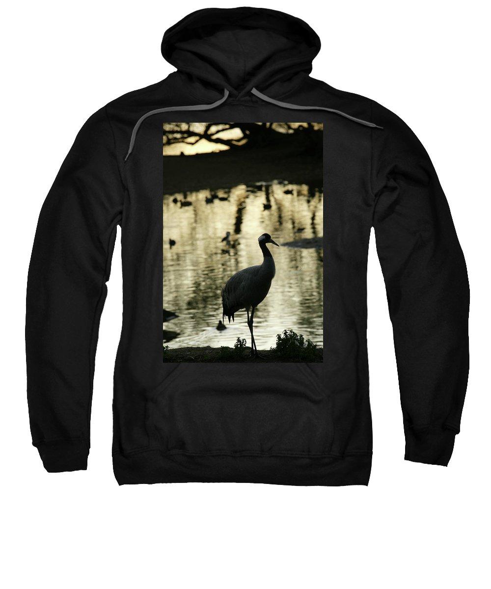 Wildlife Sweatshirt featuring the photograph Common Cranes At Gallocanta Lagoon by David Santiago Garcia