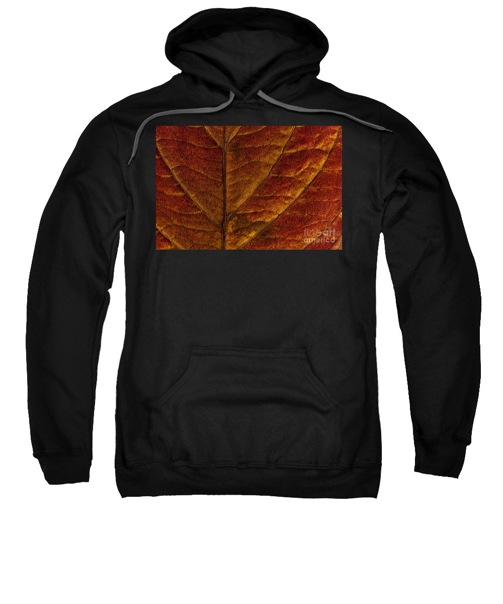 Pacific Dogwood Sweatshirt featuring the photograph Dogwood Leaf Backlit by Jim Corwin