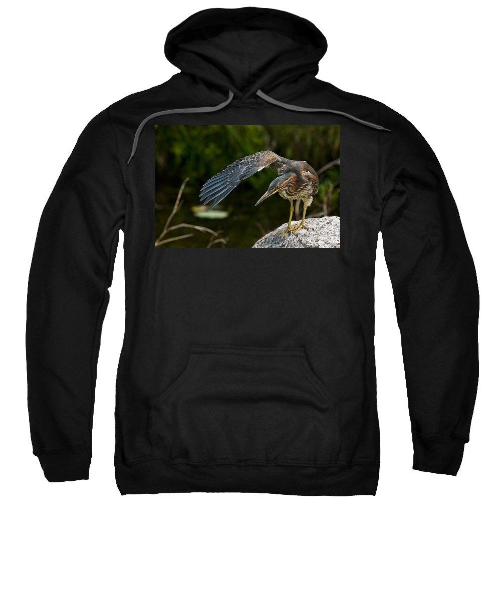 Green Heron Sweatshirt featuring the photograph Green Heron by Michael Cummings