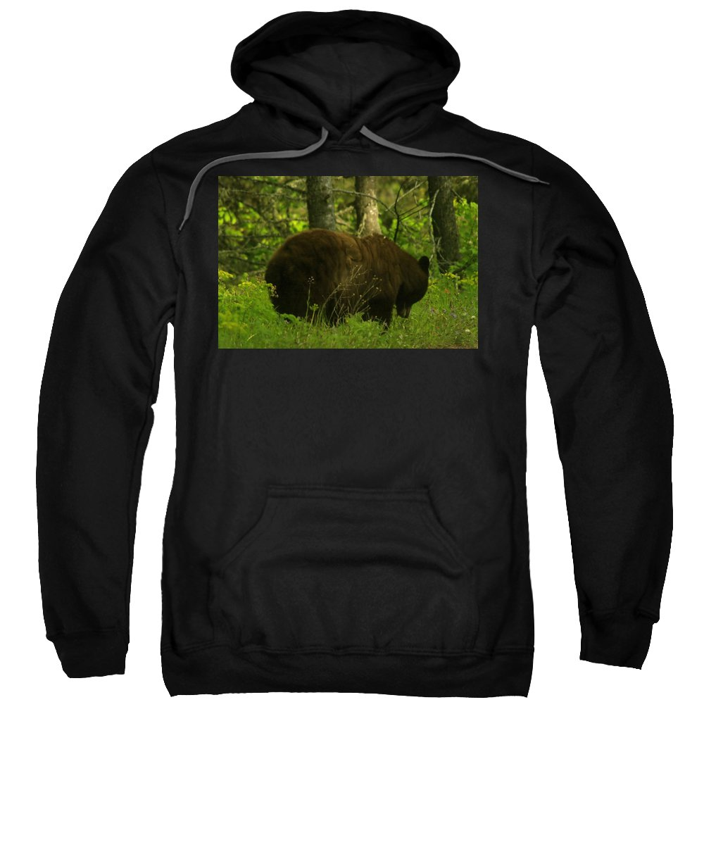 Bears Sweatshirt featuring the photograph A Big Bruin by Jeff Swan