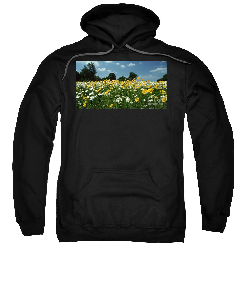Pictures Of Flowers Sweatshirt featuring the photograph A Field Of Spring by Skip Willits