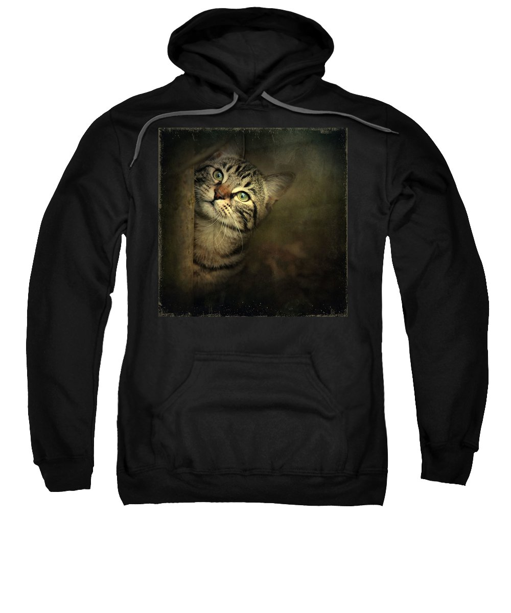 Kitten Sweatshirt featuring the photograph A Little Shy by Annie Snel