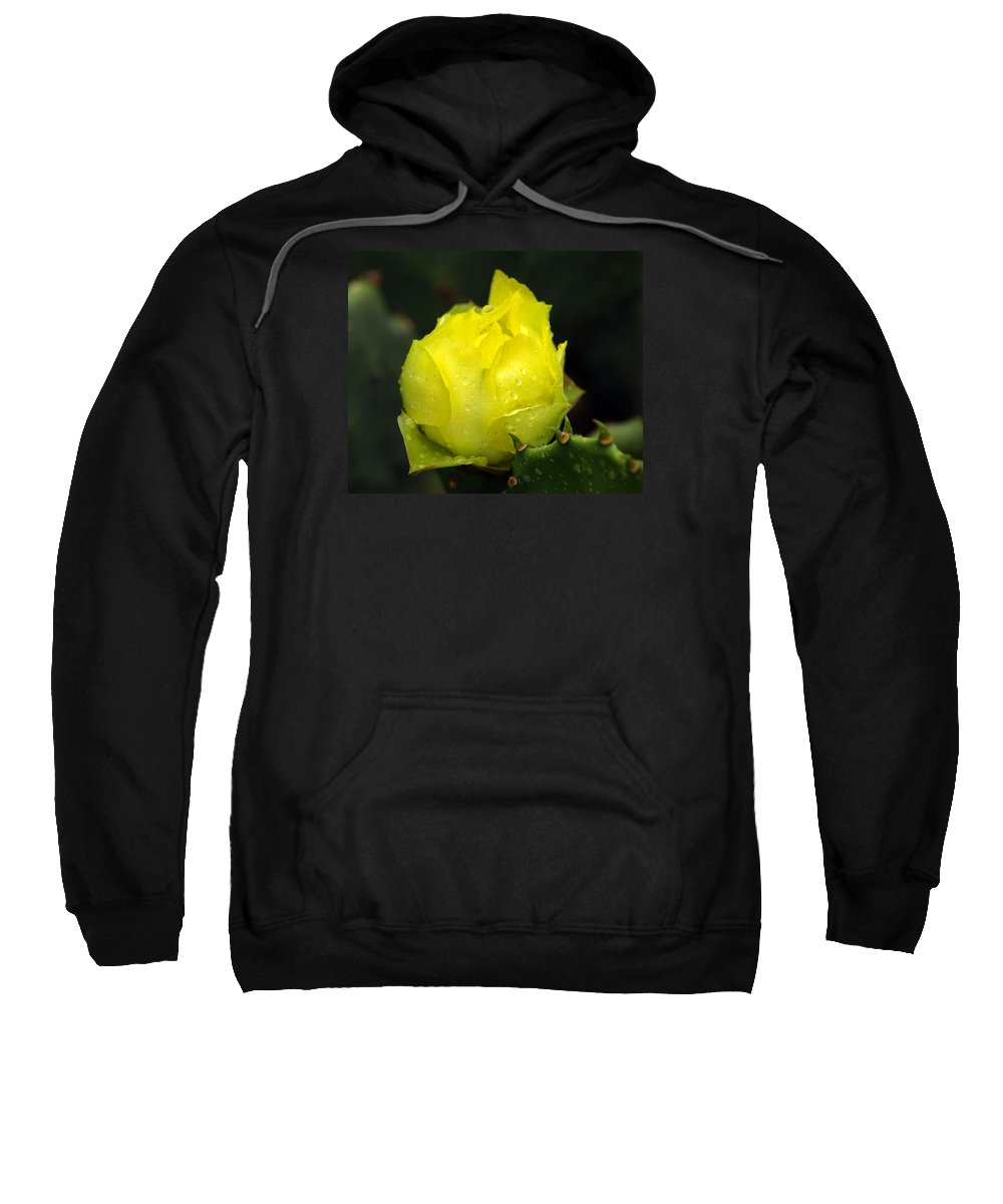 Cactus Flower Sweatshirt featuring the photograph A New Beginning by Bill Morgenstern