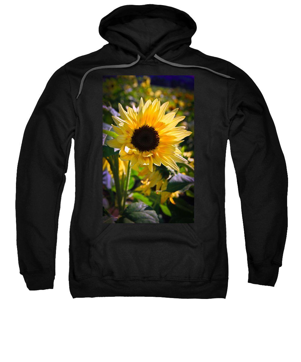 Sunflower Sweatshirt featuring the photograph A Touch Of Sunflower by Athena Mckinzie
