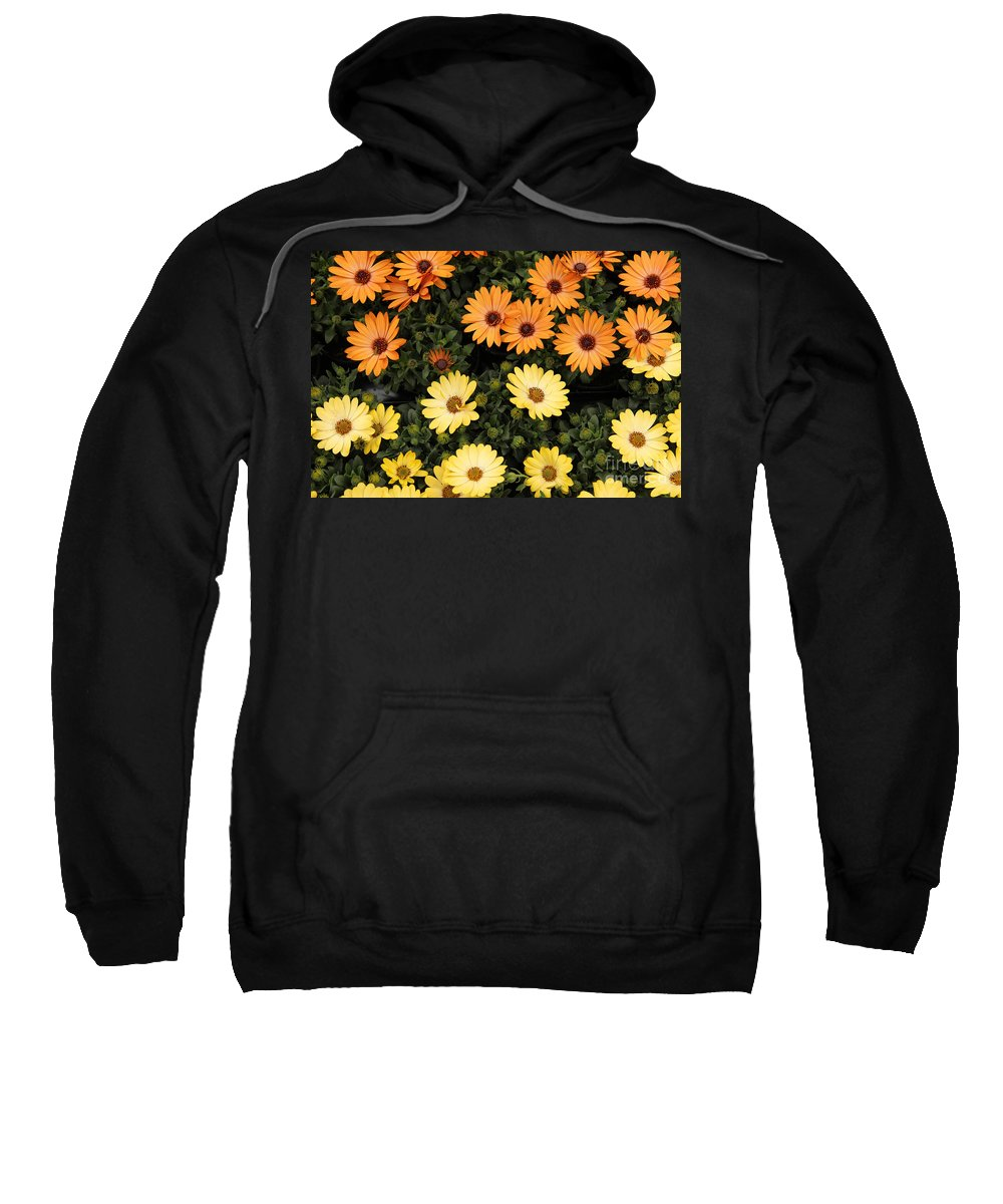 African Sweatshirt featuring the photograph African Daisies by Kerstin Ivarsson