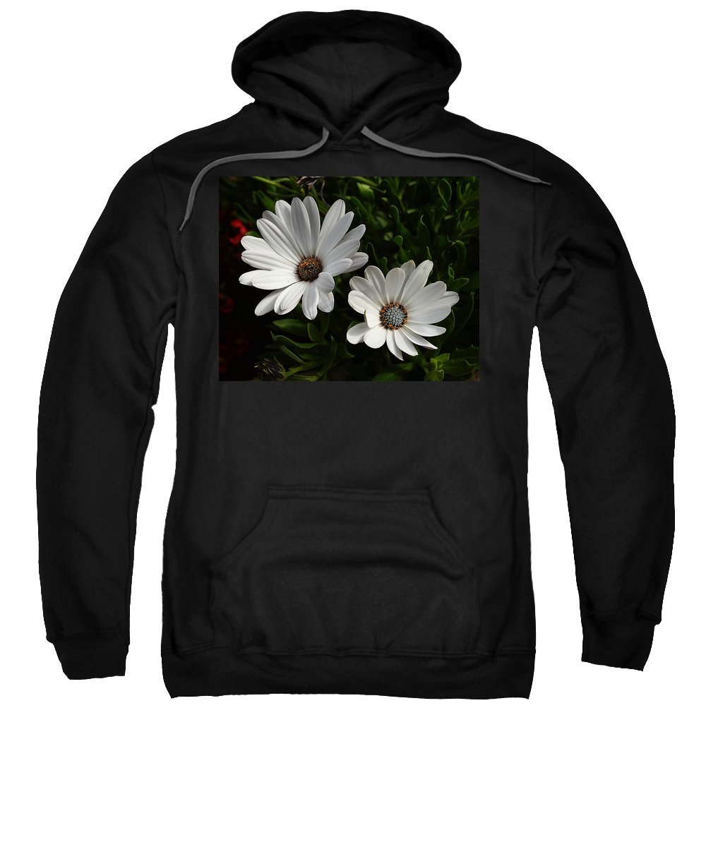 African Daisy Sweatshirt featuring the photograph African Daisy by Michael Gordon