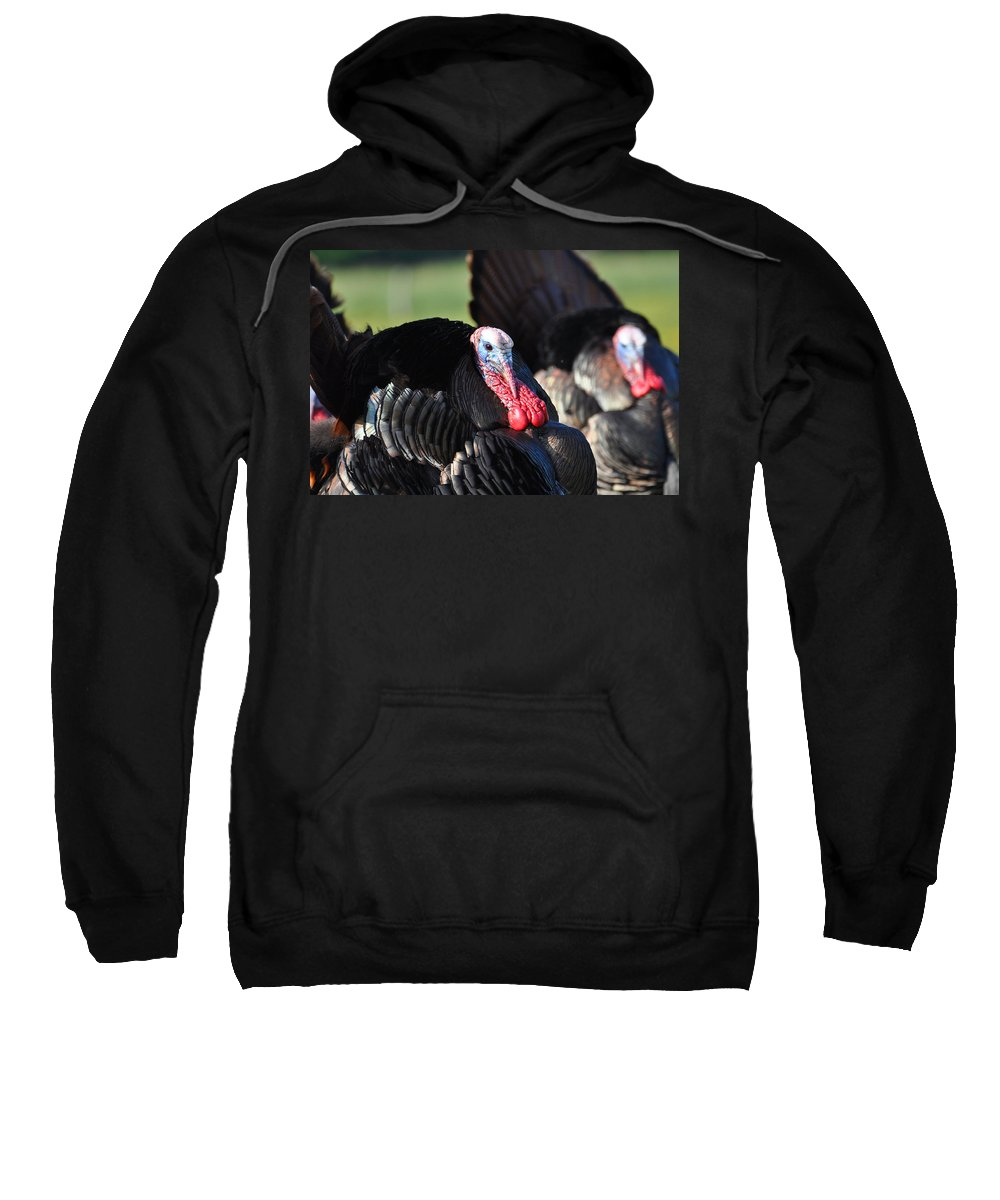 Turkey Sweatshirt featuring the photograph All Turkey by Todd Hostetter
