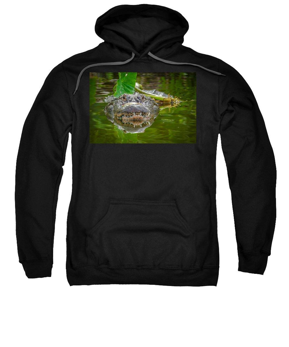 Sweatshirt featuring the photograph Alligator 2 by Dennis Goodman