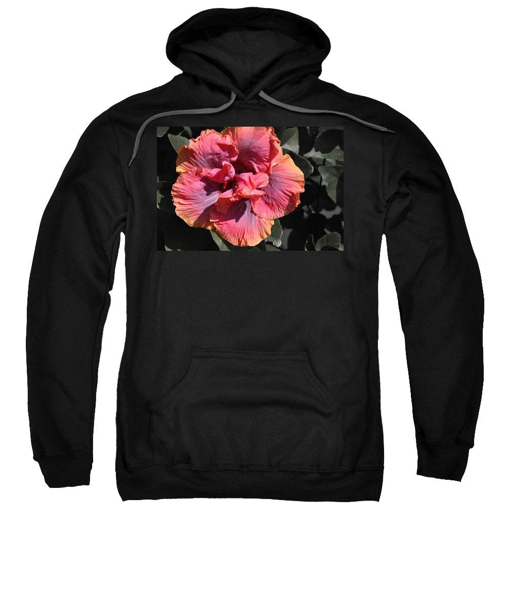 Hibiscus Sweatshirt featuring the photograph Alluring by Deborah Good