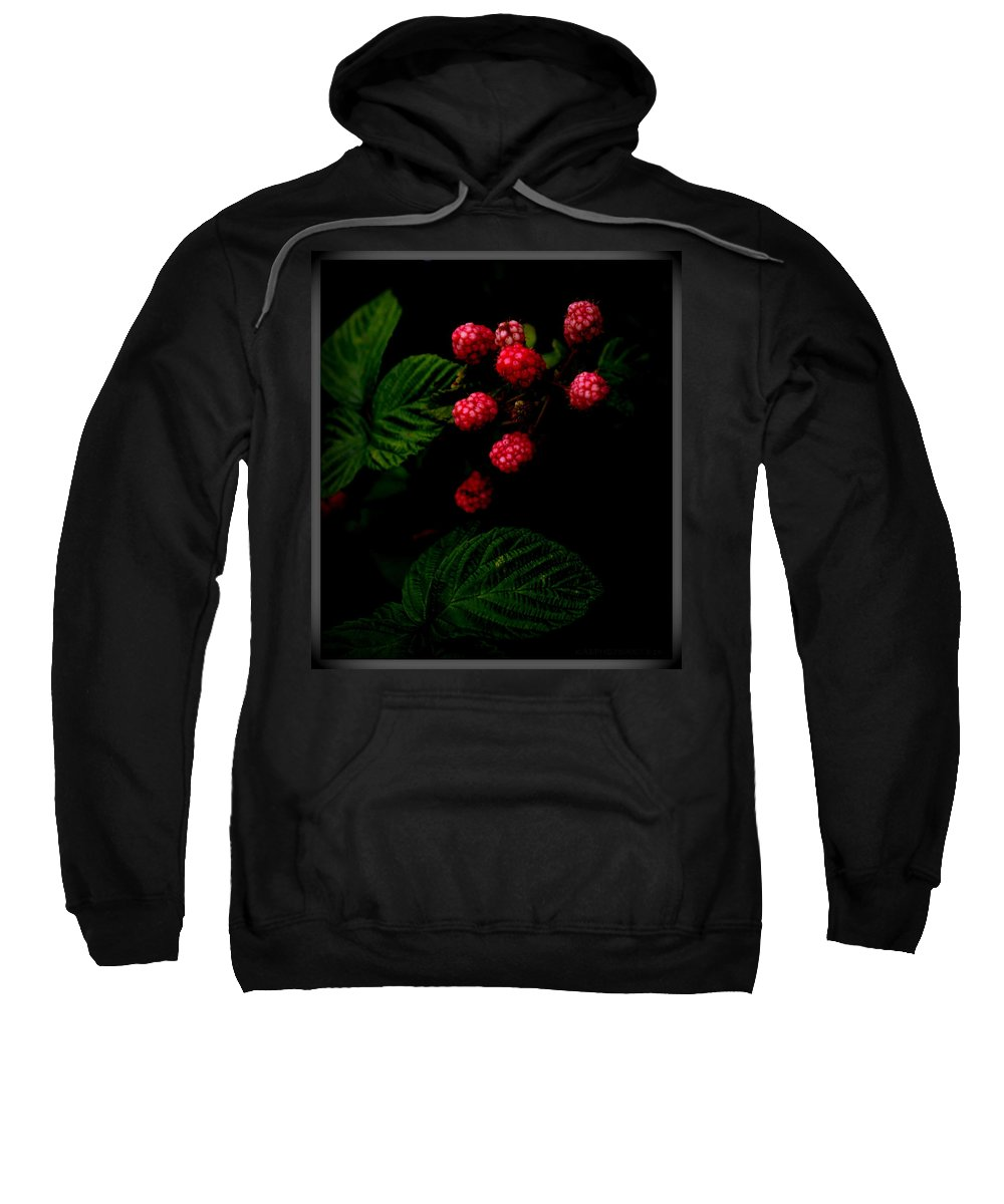 Blackberries Sweatshirt featuring the photograph Almost Ripe by Kathy Barney