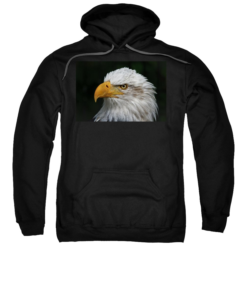 An Eagle's Portrait Sweatshirt featuring the photograph An Eagle's Portrait by Wes and Dotty Weber