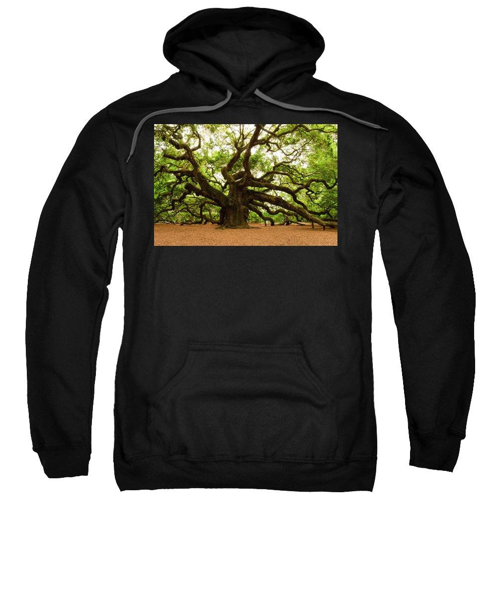 Tree Sweatshirt featuring the photograph Angel Oak Tree 2009 by Louis Dallara