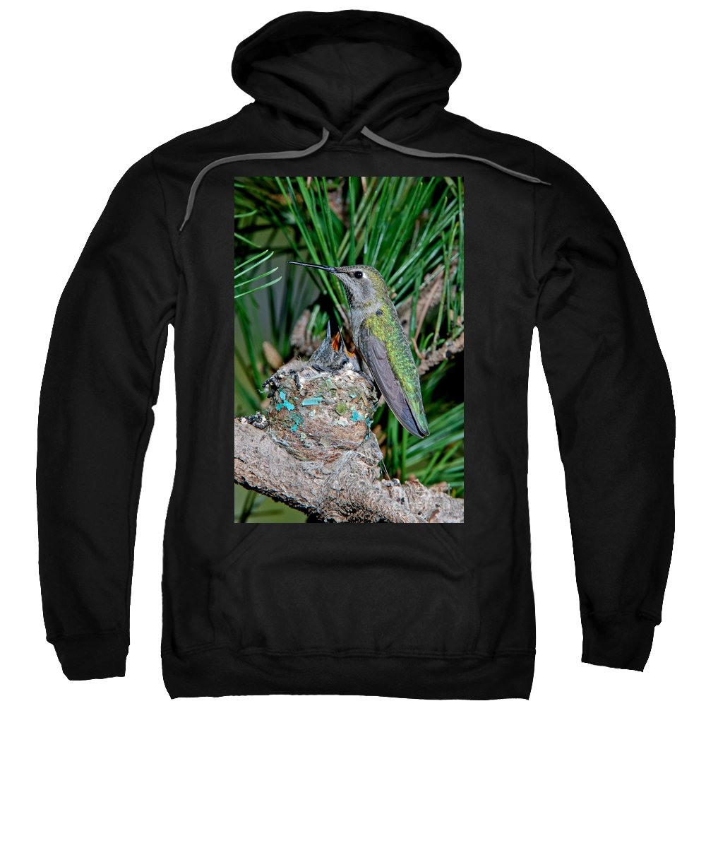 Vertical Sweatshirt featuring the photograph Annas Hummingbird With Young by Anthony Mercieca
