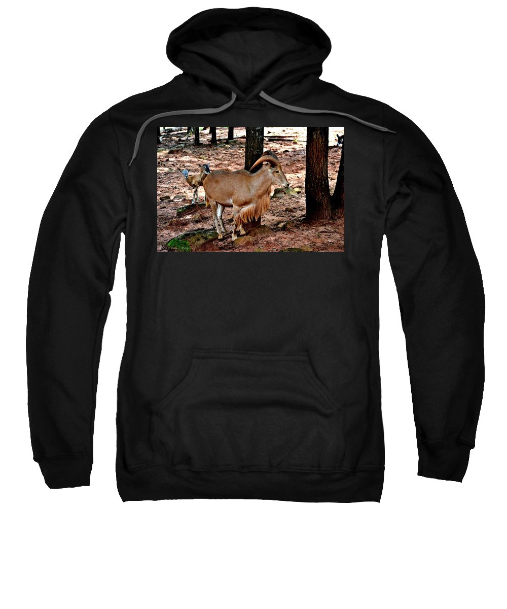 Aoudad Sweatshirt featuring the photograph Aoudad Plus 2 by Tara Potts