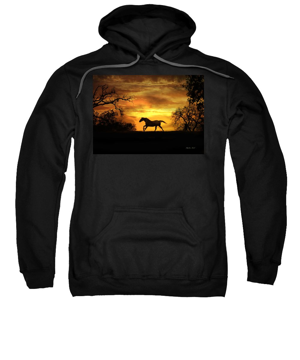 Horse Sweatshirt featuring the photograph Appaloosa Sunset by Stephanie Laird