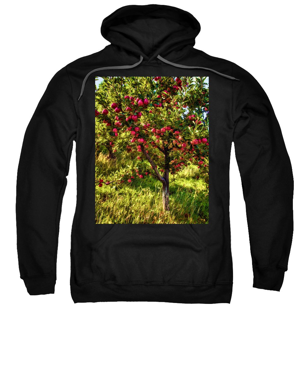 Apple Sweatshirt featuring the photograph Apple Orchard II by Diana Powell