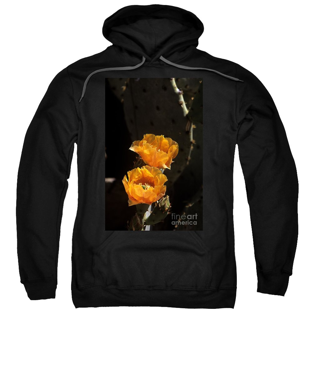 Cactus Sweatshirt featuring the photograph Apricot Blossoms by Kathy McClure