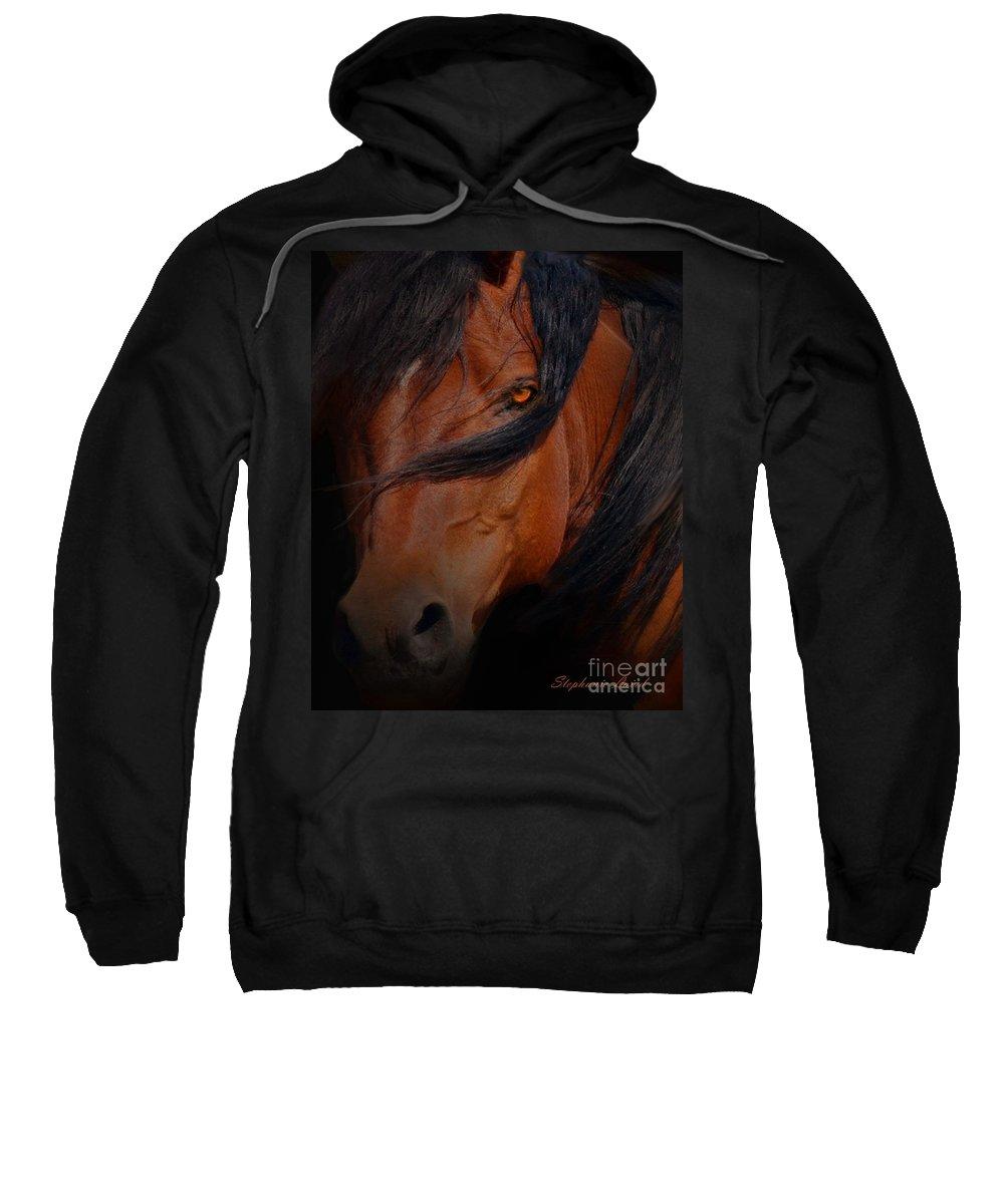 Horse Sweatshirt featuring the photograph Arabian Stallion by Stephanie Laird