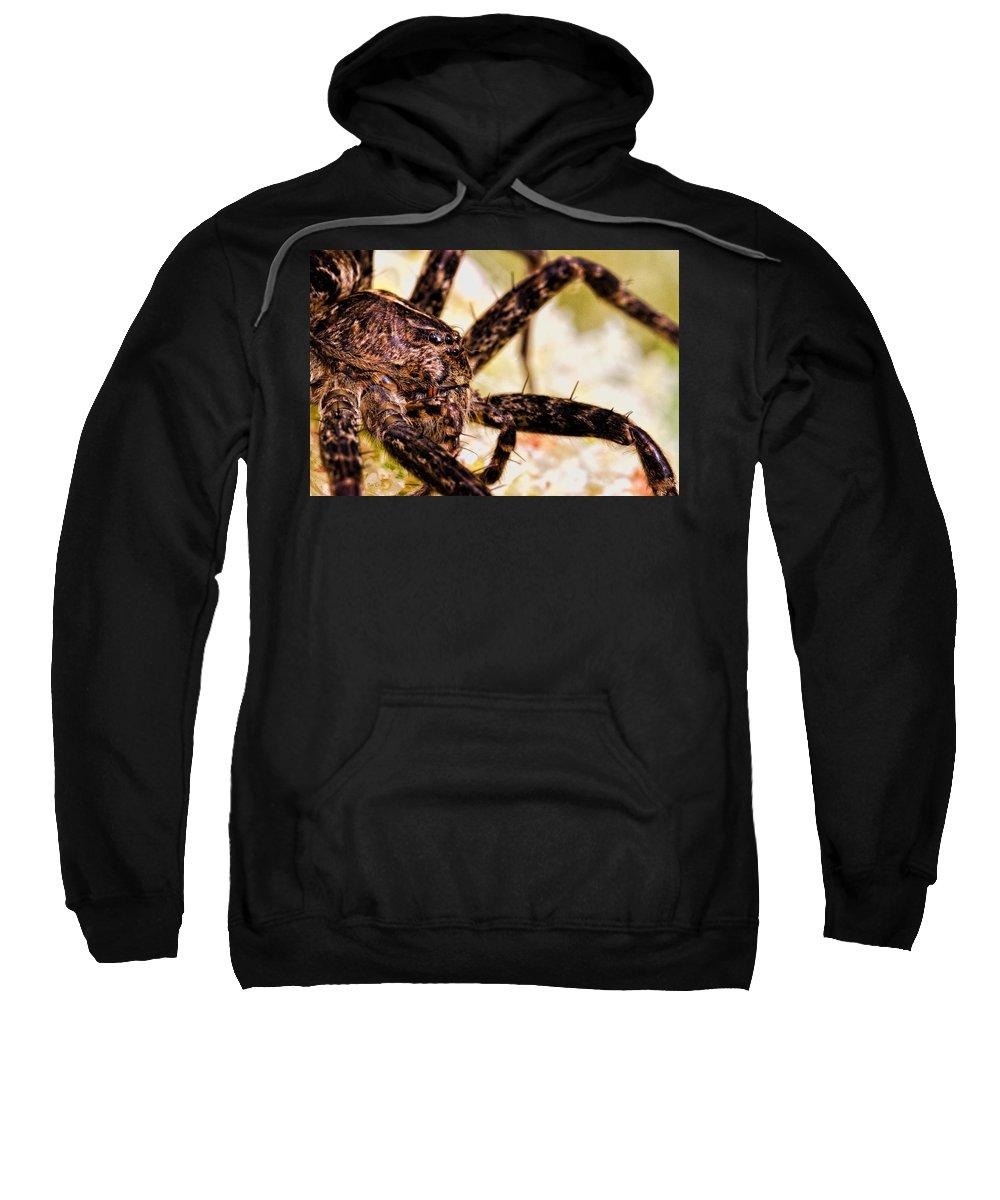 Spider Sweatshirt featuring the photograph Arachnophobia by Bob Orsillo