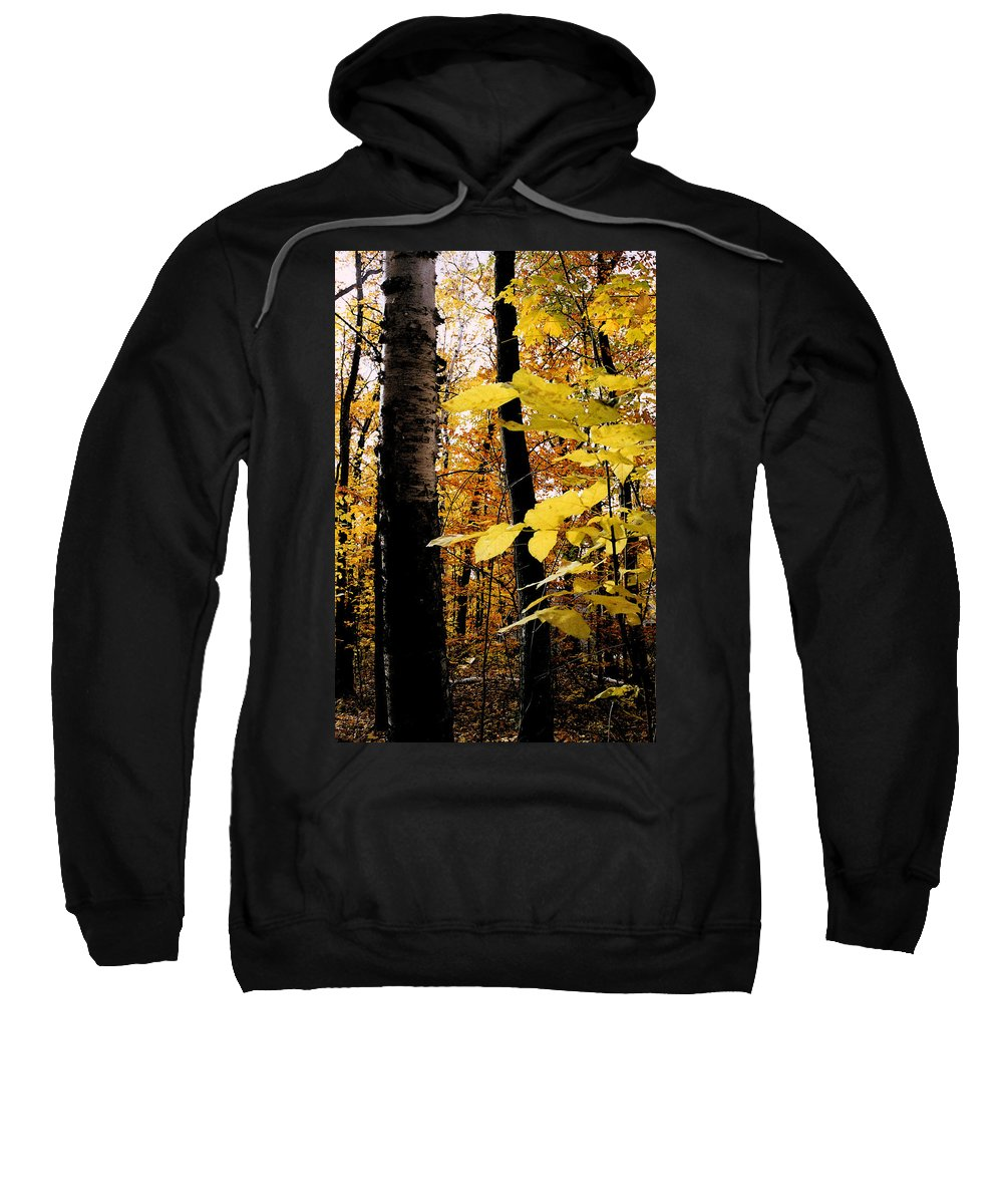 Green Sweatshirt featuring the photograph Autumn Birch Trees by Michelle Calkins