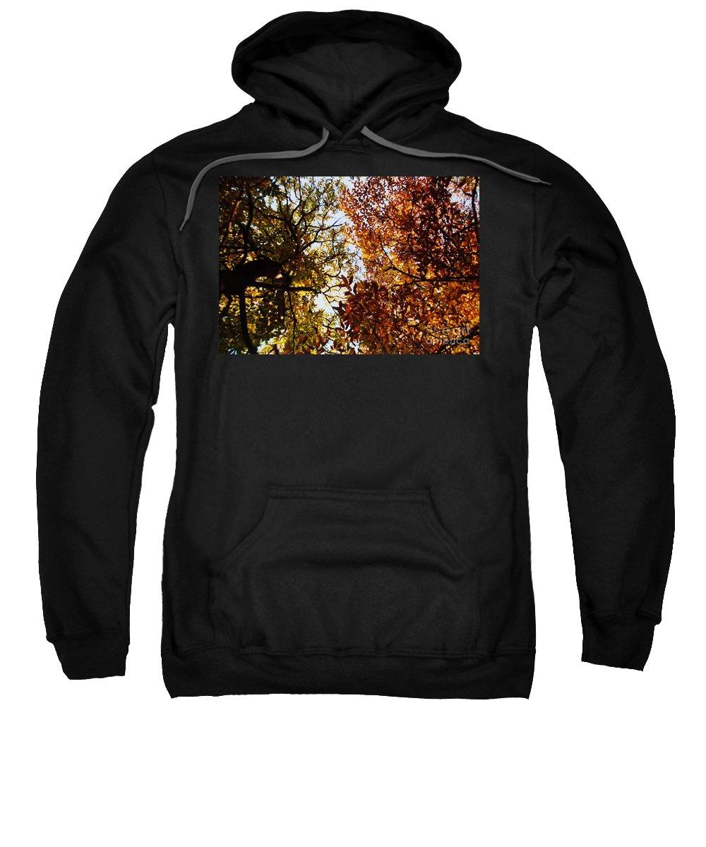 Autumn Chestnut Canopy Sweatshirt featuring the photograph Autumn Chestnut Canopy  by Martin Howard