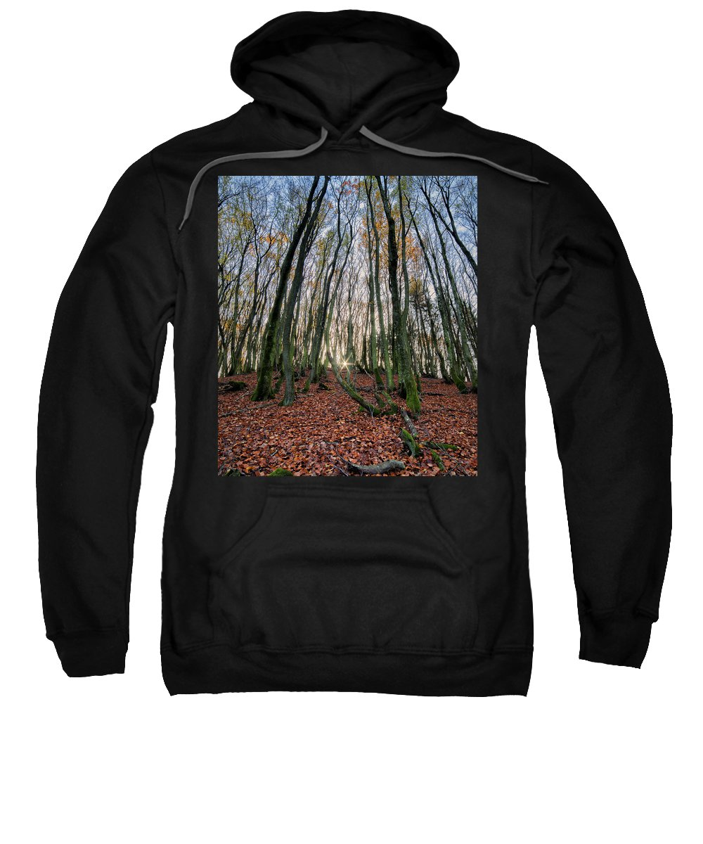 Forest Sweatshirt featuring the photograph Autumn Colors In The Forrest by Mike Santis