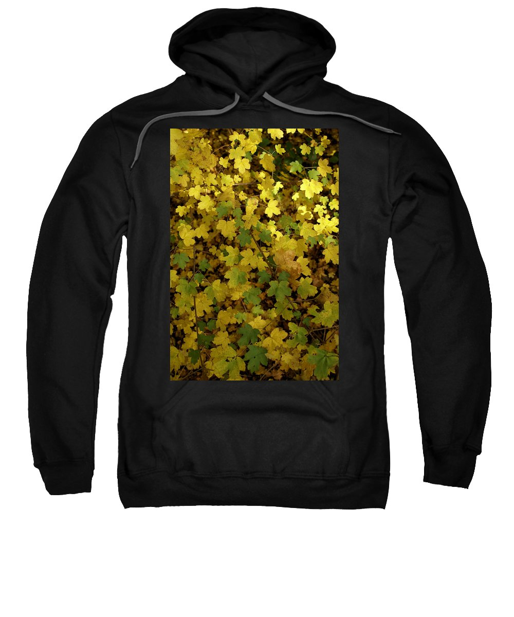 Autumn Sweatshirt featuring the photograph Autumn Leaves 091 by Ron Harpham